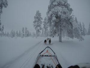 beitune Winterreise mit Husky-Schlittentour
