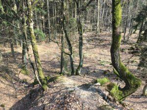 Schmale Pfade schlängeln sich den Berg hinab. Beim MTB-Trailcamp im Taunus haben wir die Gelegenheit, die Trails ausgiebig kennenzulernen.